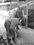 The farrier at work.